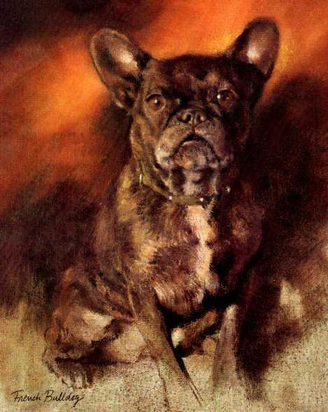bulldog-inspiration